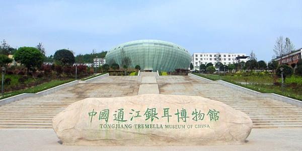通江县银耳博物馆